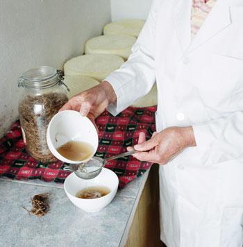 cuajo-vegetal-queso-guia