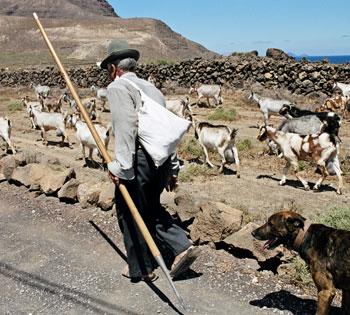 pastor-y-cabras-lanzarote